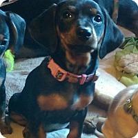 Adopt A Pet :: Gretchen - Charlestown, RI