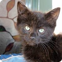 Adopt A Pet :: Rayna Jaymes - Ann Arbor, MI