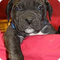 Adopt A Pet :: Mozzarella - Waldorf, MD