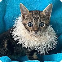 Adopt A Pet :: Tyler - Tampa, FL