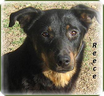 Reece | Adopted Dog | 1 yr old beauty | Marlborough, MA ...