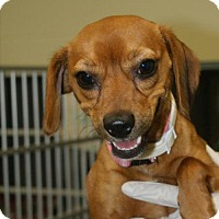 Adopt A Pet :: Milly - Kinston, NC