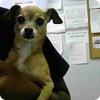 Adopt A Pet :: BRIDGETTE - Atlanta, GA