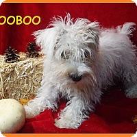 Adopt A Pet :: WooBoo - Batesville, AR