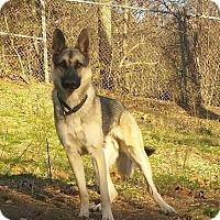 Adopt A Pet :: Eerie - Rochester, MN