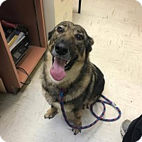 Adopt A Pet :: Kayla - Beckley, WV