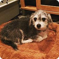 Adopt A Pet :: Noel - Thousand Oaks, CA