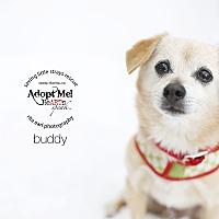 Adopt A Pet :: Buddy - Aqua Dulce, CA