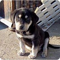 Adopt A Pet :: Bam Bam - Glastonbury, CT