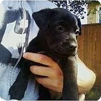 Adopt A Pet :: LENA - La Mesa, CA