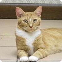 Adopt A Pet :: Clementine - Bonita Springs, FL