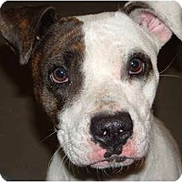 Adopt A Pet :: Susie - Julian, NC
