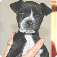 Adopt A Pet :: Holly - Golden Valley, AZ