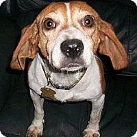 Adopt A Pet :: Tegan - Novi, MI