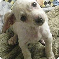 Adopt A Pet :: Thumbelina - Phoenix, AZ