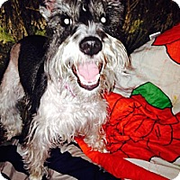 Adopt A Pet :: Tiara - Hazard, KY