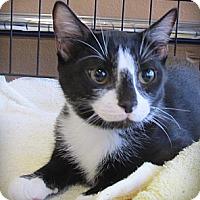 Adopt A Pet :: Felix - Seminole, FL
