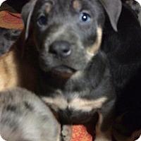 Adopt A Pet :: Dee - Salem, MA