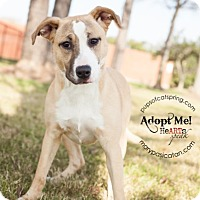 Adopt A Pet :: Sandi - Cat Spring, TX
