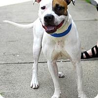 Adopt A Pet :: Legacy-Adopted! - Detroit, MI