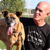 Adopt A Pet :: Suede-Prison Dog - Elyria, OH