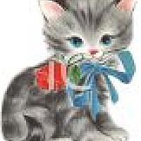 Adopt A Pet :: NEW KITTENS! - Kennesaw, GA
