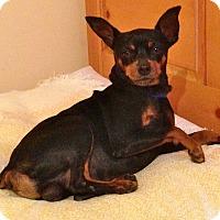 Adopt A Pet :: RUDY - Van Nuys, CA