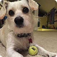 Adopt A Pet :: Skruffy - San Francisco, CA