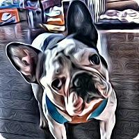 Adopt A Pet :: Bandit - Peterborough, ON