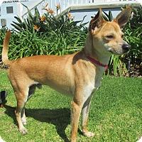 Adopt A Pet :: ROUX - Los Angeles, CA