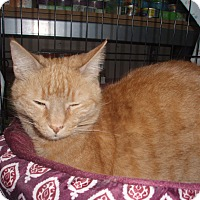 Adopt A Pet :: Melody - Germansville, PA