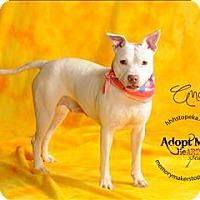 Adopt A Pet :: Andi - Topeka, KS