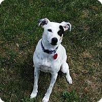 Adopt A Pet :: Geordie - Campbell, CA