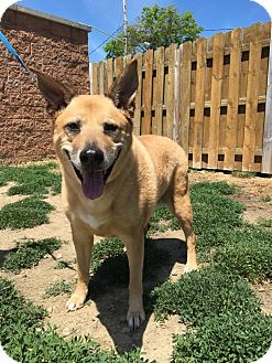German Shepherd Dog/Chow Chow Mix Dog for adoption in Avon, Ohio - Purdy