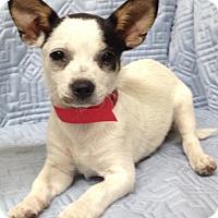 Adopt A Pet :: Delilah - Jasper, TN