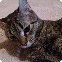Adopt A Pet :: Phoenix - Alliance, OH