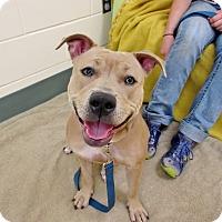 Adopt A Pet :: KAYA - Boston, MA
