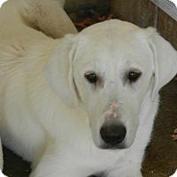 Adopt A Pet :: TESSA - Granite Bay, CA