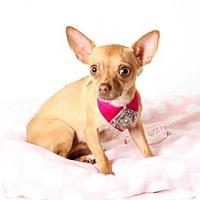 Adopt A Pet :: *LUCY - Sacramento, CA