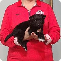 Adopt A Pet :: Cody - South Euclid, OH