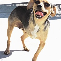 Adopt A Pet :: Megan - La Habra Heights, CA