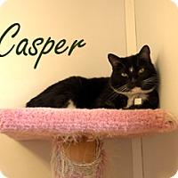 Adopt A Pet :: Casper - Hamilton, MT