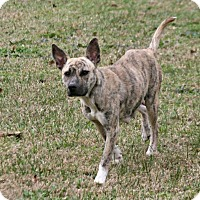 Adopt A Pet :: Lyric - Lufkin, TX