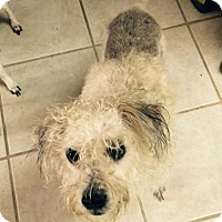 Adopt A Pet :: Nikki Lo Camo in TX - Providence, RI