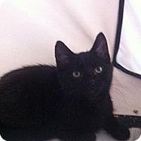 Adopt A Pet :: Rambo - Long Beach, NY