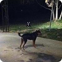 Adopt A Pet :: Brutus - Hilham, TN