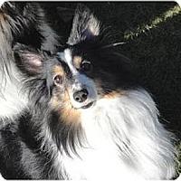 Adopt A Pet :: Millie - Circle Pines, MN