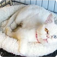 Adopt A Pet :: Gremlin - Modesto, CA