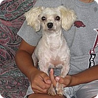 Adopt A Pet :: Pete - Salem, NH
