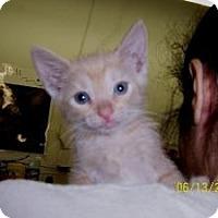 Adopt A Pet :: Cashew - Island Park, NY